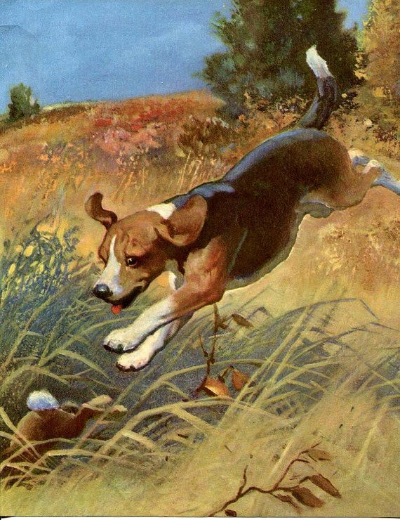 Vintage Beagle Dog Illustration By Wesley Dennis Which Shows The