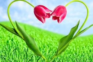 Valentines Day Tulips Heart http://goo.gl/fb/AZeQw1  #celebrities #tulipsheart #valentinesday