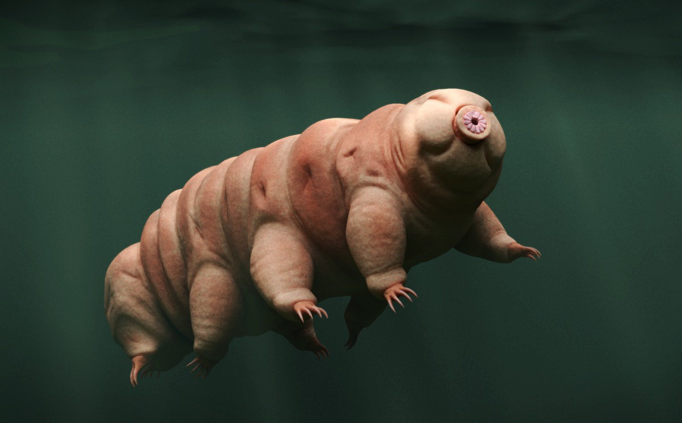 An Even Weirder Than Usual Tardigrade Just Turned Up In A Parking Lot 動物 ぬいぐるみ