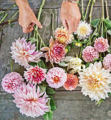 How One Mom Raises Her Family On A Flower Farm Flower Farm Farmers Market Flowers Flowers