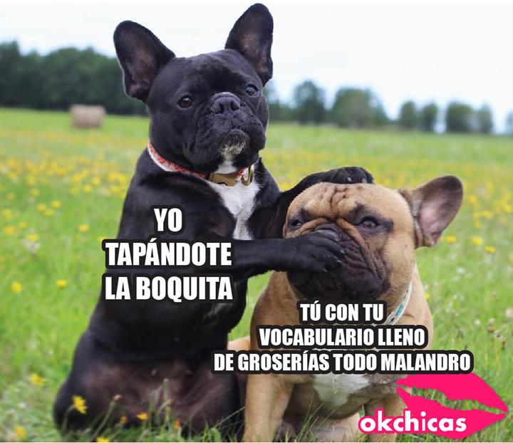 A Todaaaaassss Mis Amigas Perros Perros Bulldog Ingles Perros Bulldog Frances