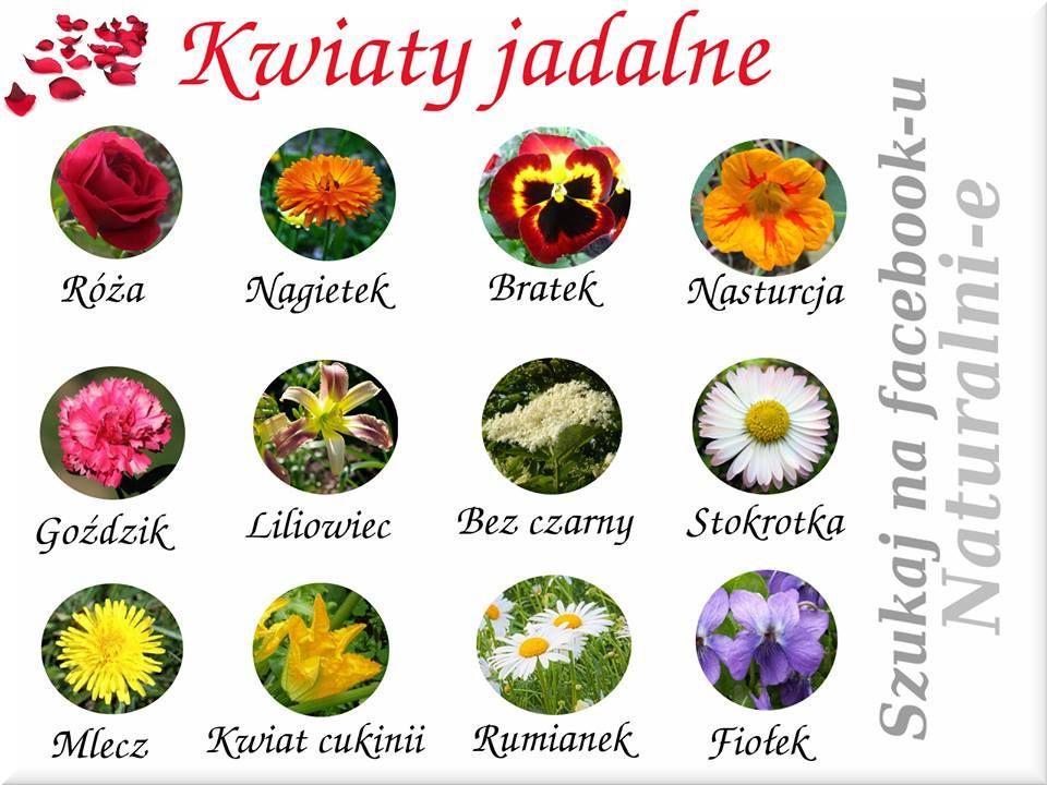 Kwiaty Jadalne Herbalism Health Food Herbs