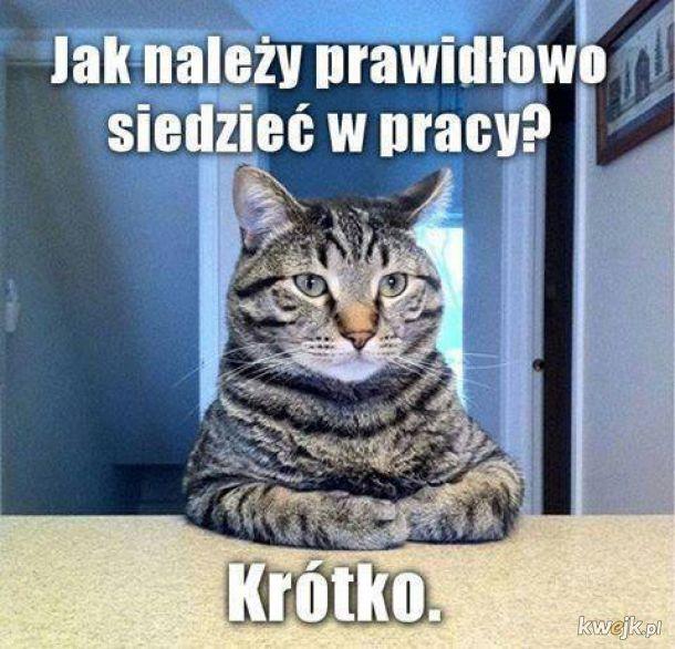 Memy I Smieszne Obrazki Z Glownej Strona 43287 Kwejk Pl Funny Articles Funny Haha Funny #my chemical romance #mcrmy #polish mcrmy #mcmry polska #kwejk. memy i smieszne obrazki z glownej