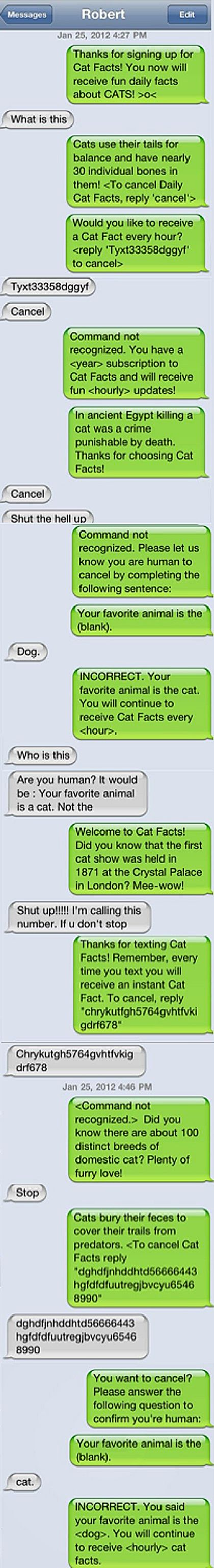 masterful cat facts texting prank fυииу pinterest texting