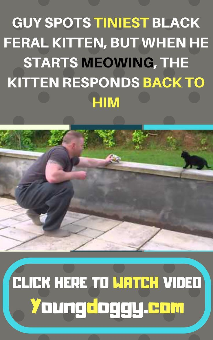 GUY SPOTS TINIEST BLACK FERAL KITTEN, BUT WHEN HE STARTS MEOWING, THE KITTEN RESPONDS BACK TO HIM #animalrescue