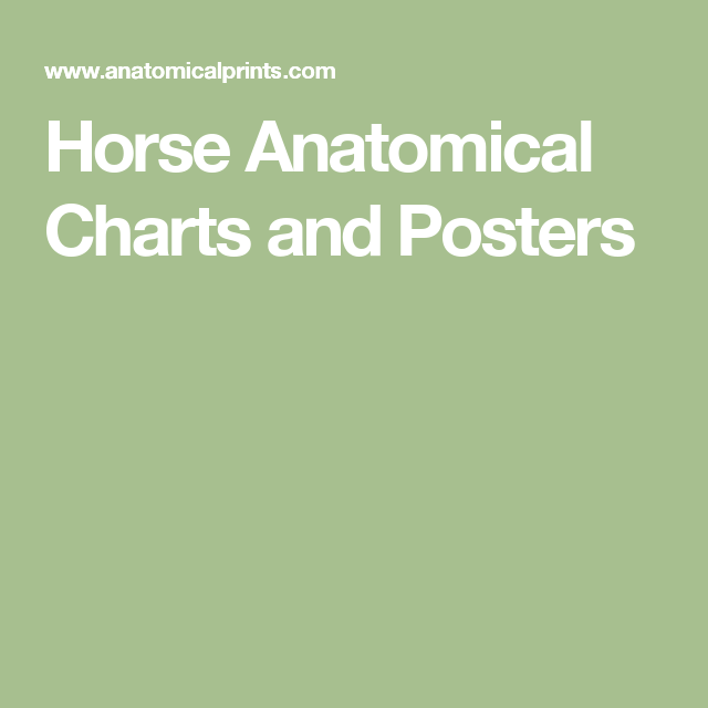 Horse Anatomical Charts and Posters | Horse Anatomy | Pinterest ...