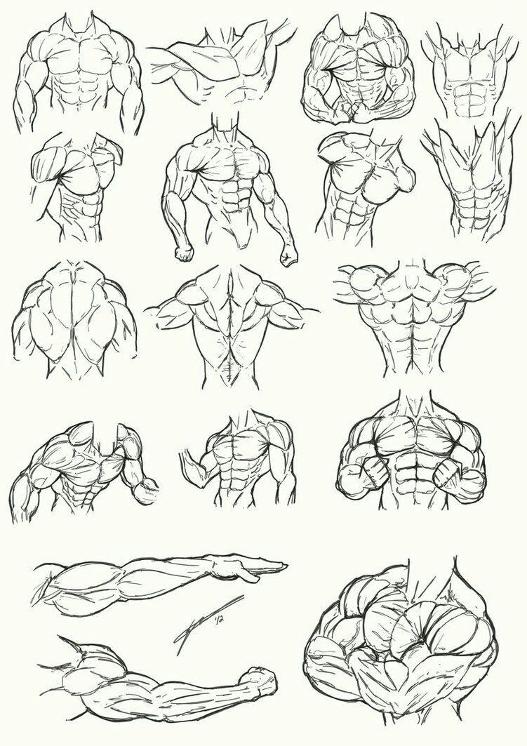 Авторская миниатюра Дениса Соула   draws   Pinterest   Anatomie ...