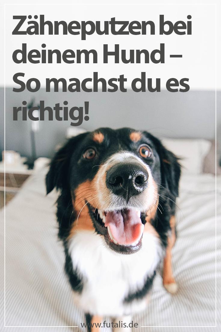 Ebenso wie beim Menschen ist auch beim #Hund eine regelmäßige #Zahnpflege entscheidend für die #Zahngesundheit. Nicht alle #Hundebesitzer sind sich über die Risiken mangelnder Zahnpflege im Klaren. Dabei zählen #Zahnstein und die daraus folgende #Parodontitis, also eine bakterielle Infektion des Zahnhalteapparates, zu den häufigsten #Hundekrankheiten und entstehen oft bereits in jungem Alter. | futalis.de