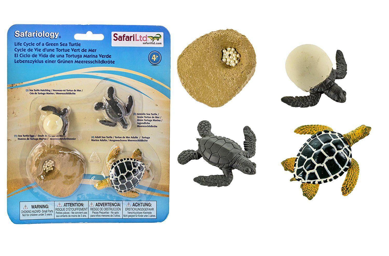 Amazon Safari Ltd Life Cycle Of A Green Sea Turtle