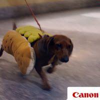 Lo más de Canon