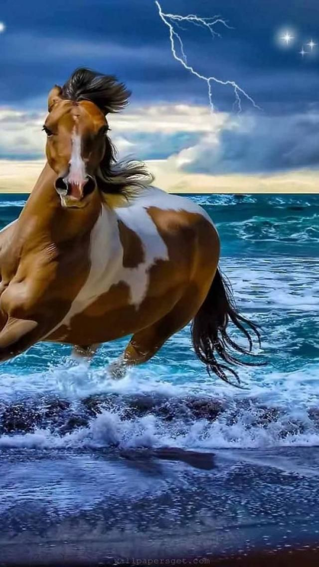 Nature's Beauty ☀spain, andalusian horse, gray, sea, lightning
