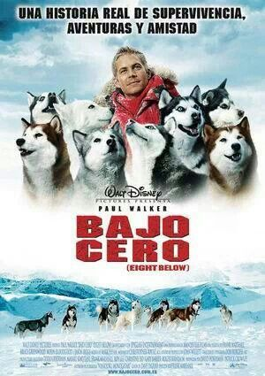 Bajo Cero Winter Movies Paul Walker Movies Dog Movies