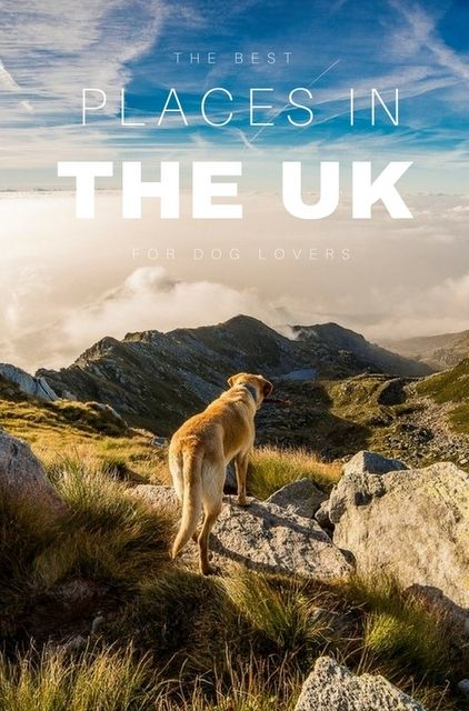 The Best UK Destinations for Dog Lovers   Europe Travel