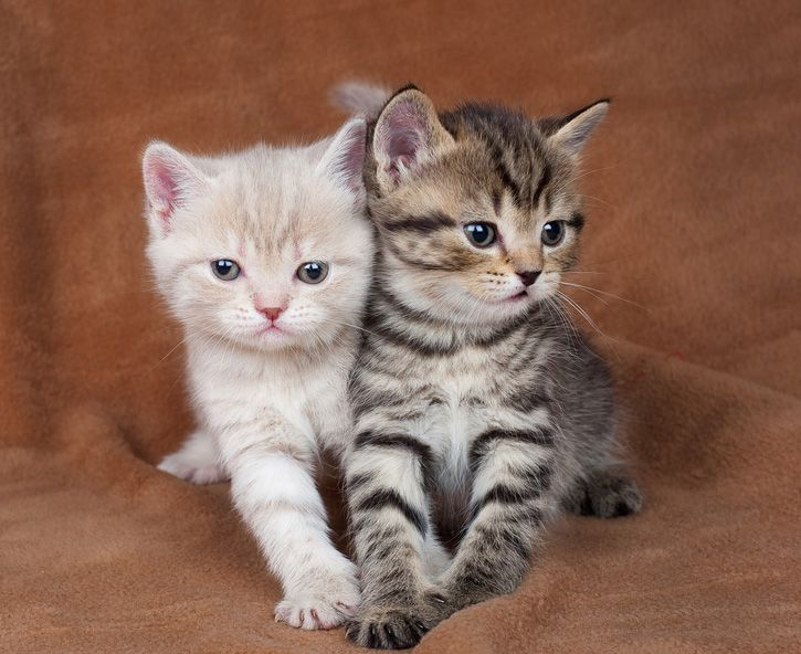 One Kitten Or Two Kittens Cutest Kittens Cute Animals