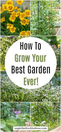How To Grow Your Bes Https Ift Tt 2wgdr6f Organic