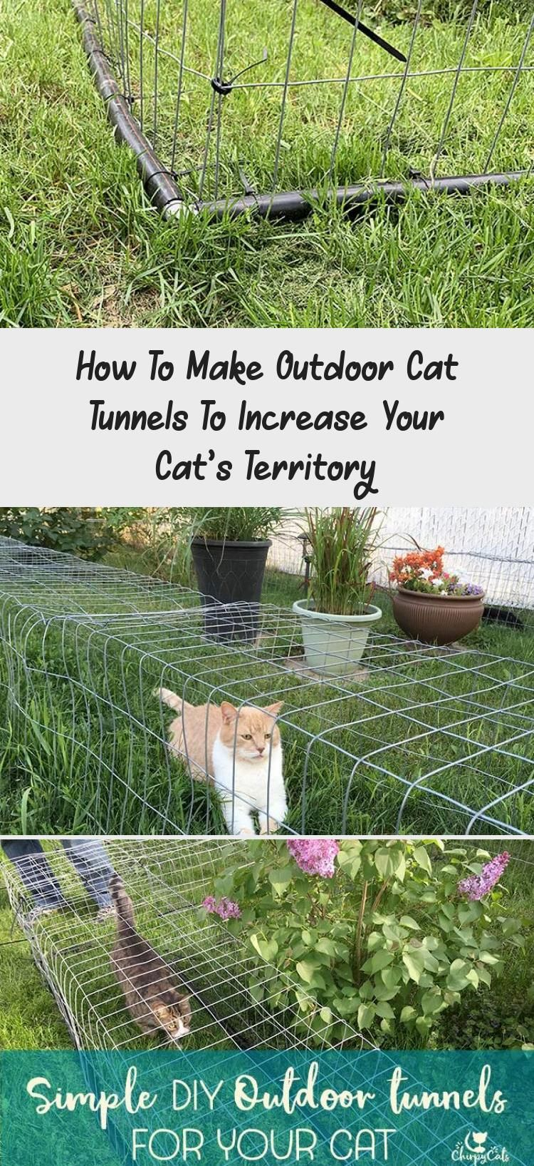 How To Make Outdoor Cat Tunnels To Increase Your Cat's