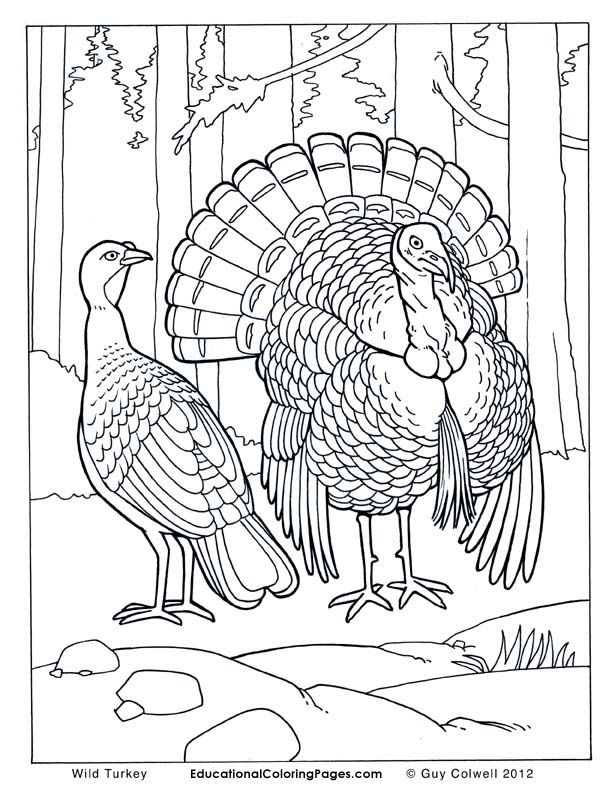 Realistic Animal Coloring Pages Coloring Pages Turkey Coloring