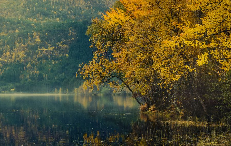 Photo Autumn in Volda by Jose Eduardo Garcia Aldama on 500px
