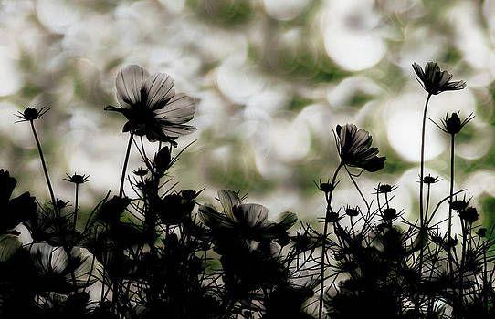 Autumn Chorus by Keisuke Ikeda @,  #autumn #Chorus #Ikeda #Keisuke