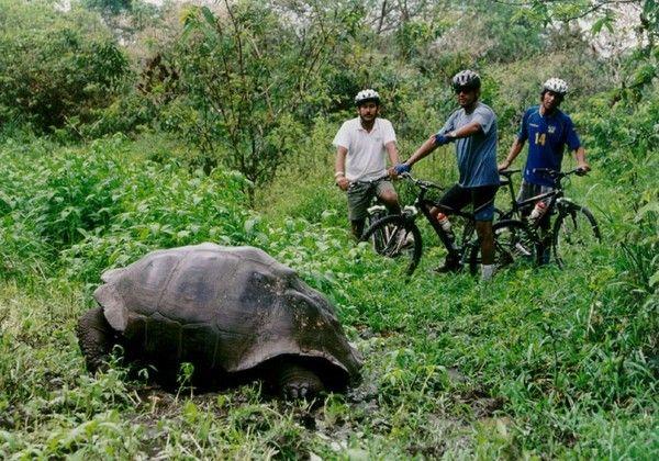 Bicycle the Galapogos.  Dream dream dream.