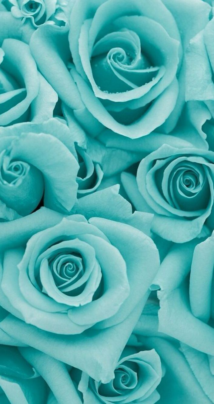 Awesome Fond Decran Iphone Hd 544 Beautiful Flowers Blue Roses Beautiful Roses