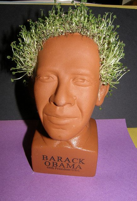 Lol Obama Chia Pet Doesn T It Look Like Don King Ahahahahaahaha Chia Pet Obama Chia Pet Pottery Planters