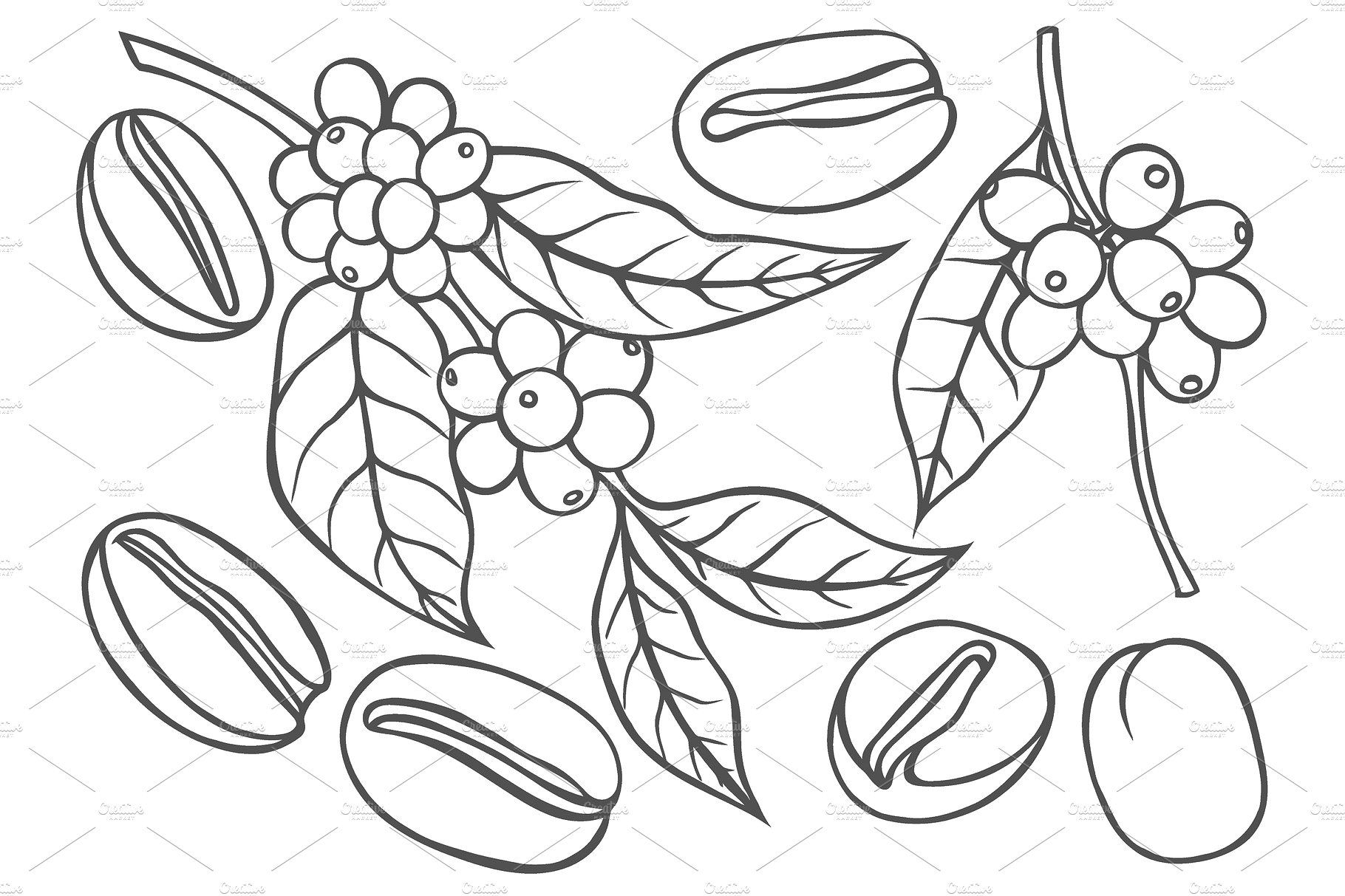 Berries Leaves Shoots And Grains Of Coffee Monochrome Drawing