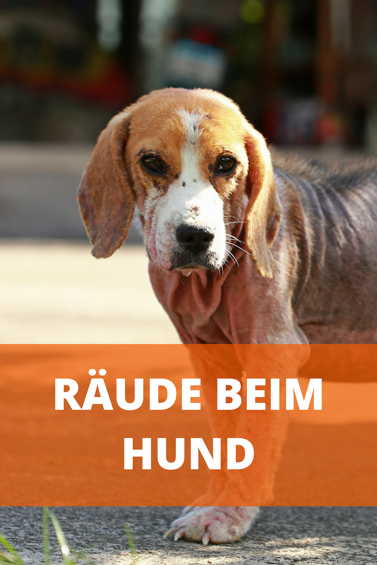 Wirksame Mittel Gegen Räude Beim Hund Was Hilft Gegen Milben