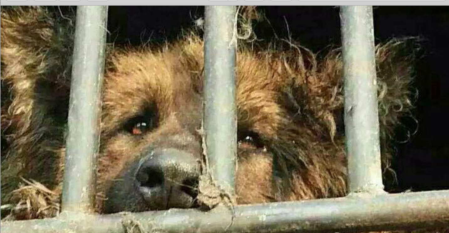 Pin on EndTheDogMeatTrade