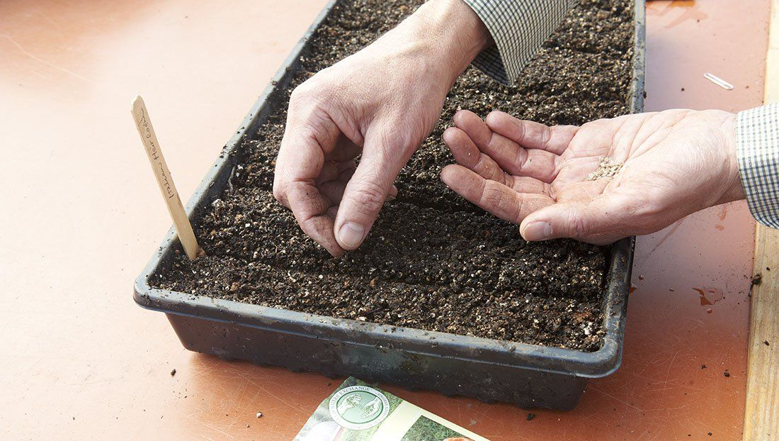 Good housekeeping hearst starting plants from seeds