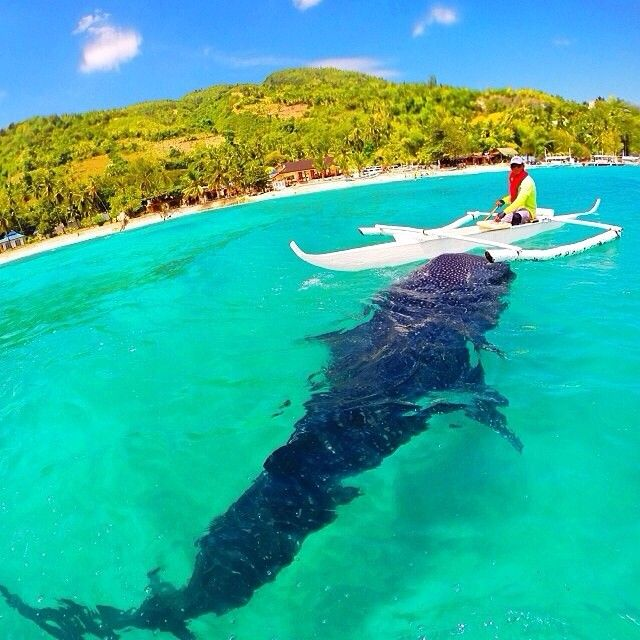 WOW Pictures on Twitter   Philippines vacation