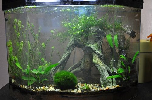 how to clean pebbles in fish tank