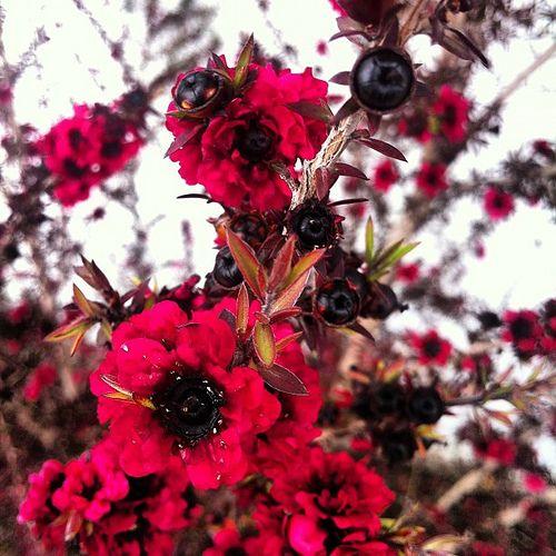 #flowers #flower   by #WILLPOWERPHOTO