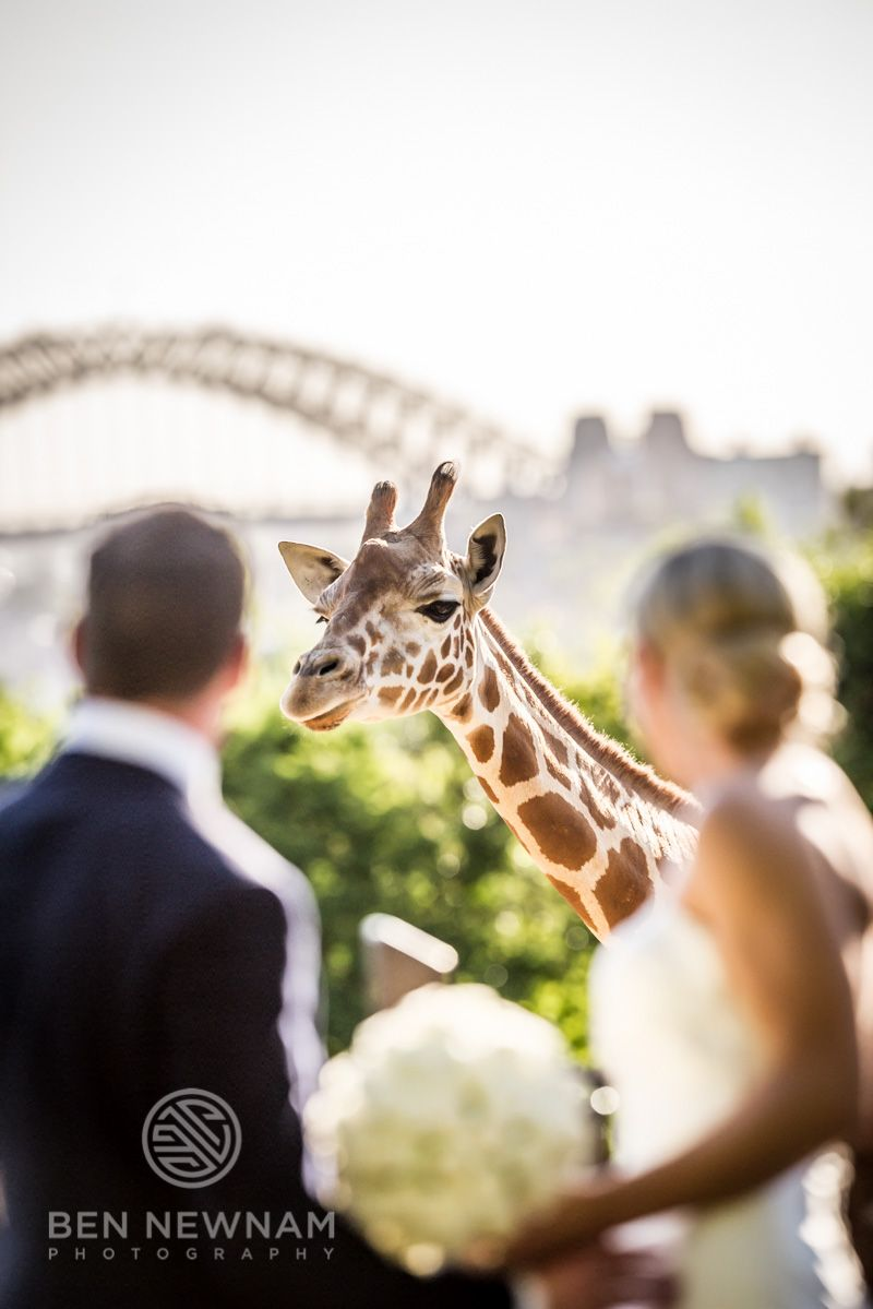 Taronga Zoo Wedding More Images Can Be Found Here Http Www