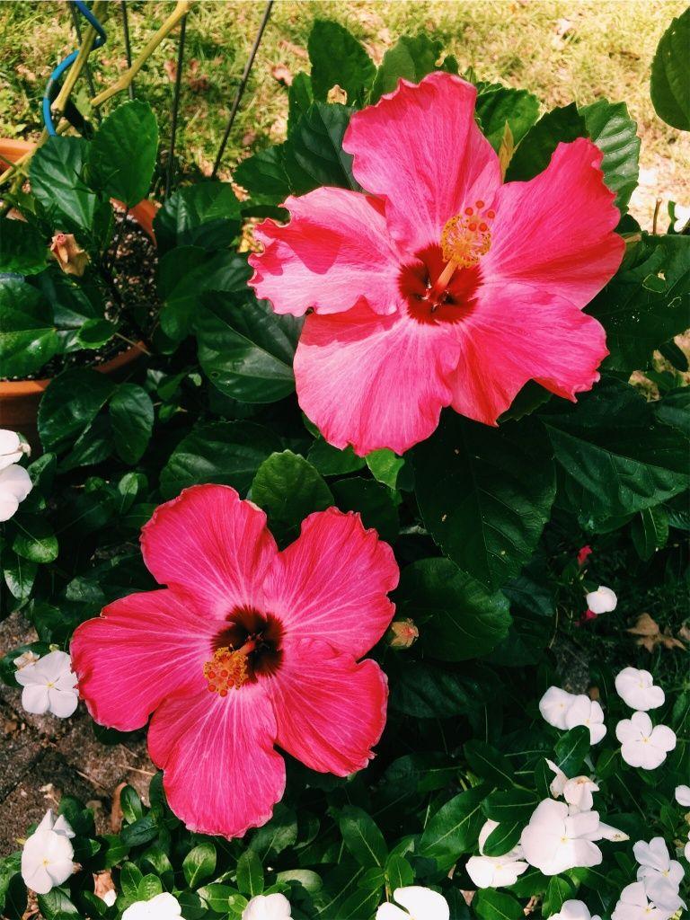 Veni vidi amavi flora u fauna pinterest