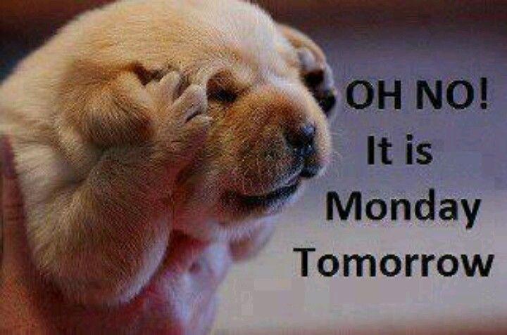 Monday :(