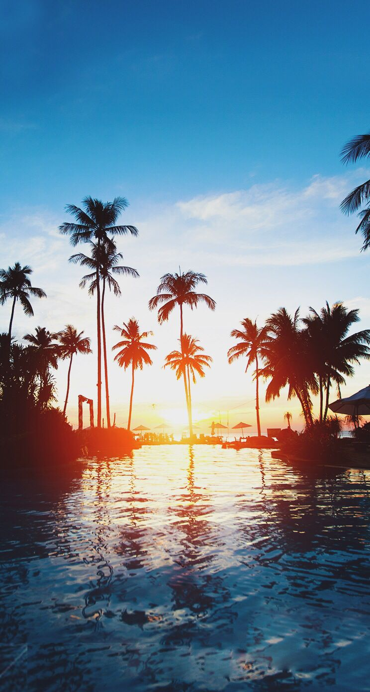 Beautiful sunset palm trees iphone wallpaper iPad