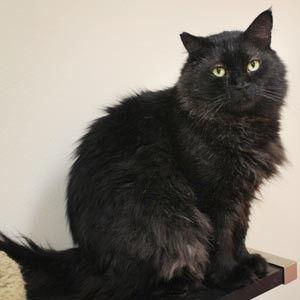 Los Angeles Cat Adoption Of The Week Meet Winnie Jackson Biggles Cat Adoption Cats Cats And Kittens