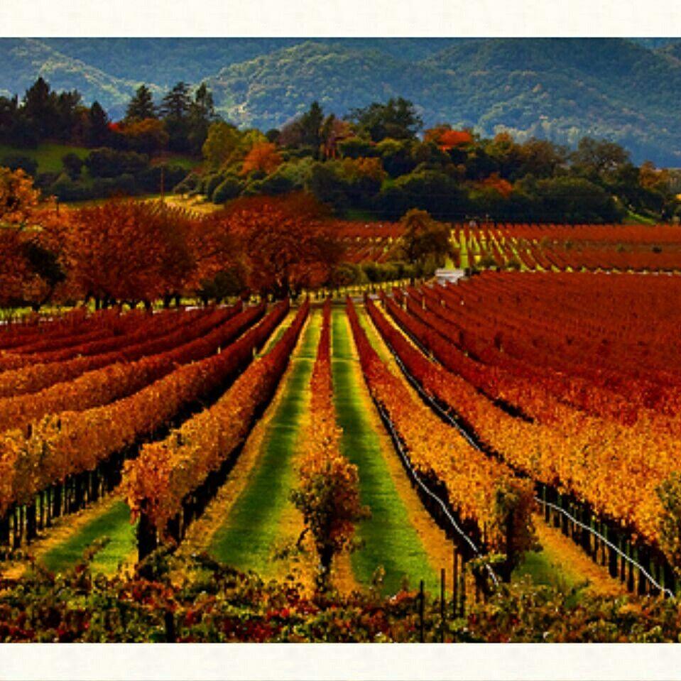 NAPA Valley California   Travel   Napa valley wine, Sonoma ...