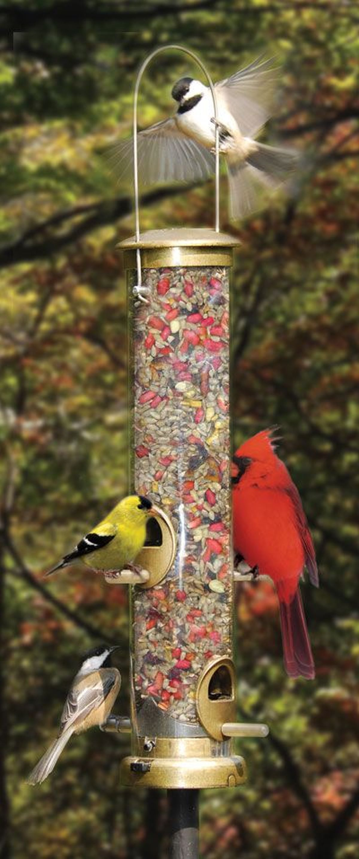 Bird feeders how to attract birds by feeding habits how