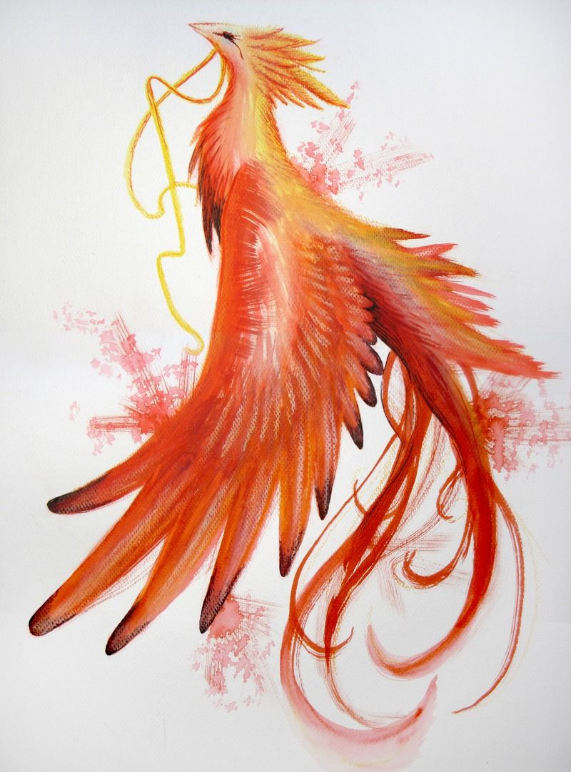 Fire bird tumblr phoenix writer pinterest phoenix for Fire tumblr