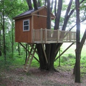 Columbus Ohio Treehouse Tree Houses By Tree Top Builders Treehouse Tree Tree House Tree