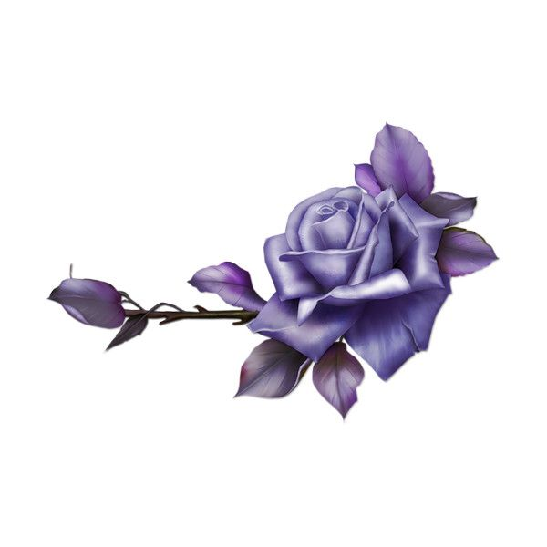 Monro Diz Mauverosegroup Png Na Yandeks Fotkah Purple Roses Vintage Rose Cards Flowers