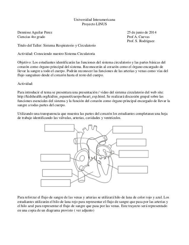 Lujoso Sistema Circulatorio Hoja De Trabajo Bandera - hojas de ...