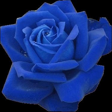 Kk png kpek google keress png kpek pinterest flowers flowers mightylinksfo