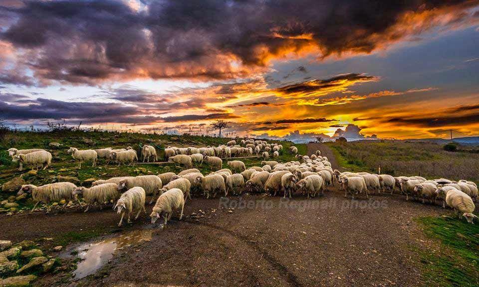 Sardinia at sunrise Love this sunrise picture of +Roberto Reginali! Thank you! Residence La Rosa: Un tramonto come questo…solo in Sardegna. #tramonti #sardegna #panorami La foto è del nostro amico +Roberto Reginali http://bit.ly/1uuIu43