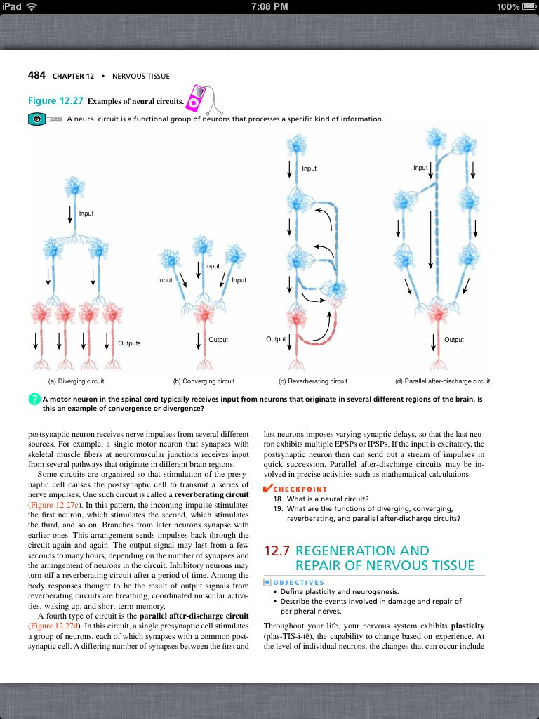 Principles of Anatomy and Physiology, Chapter 12, Nervous Tissue, 38 ...