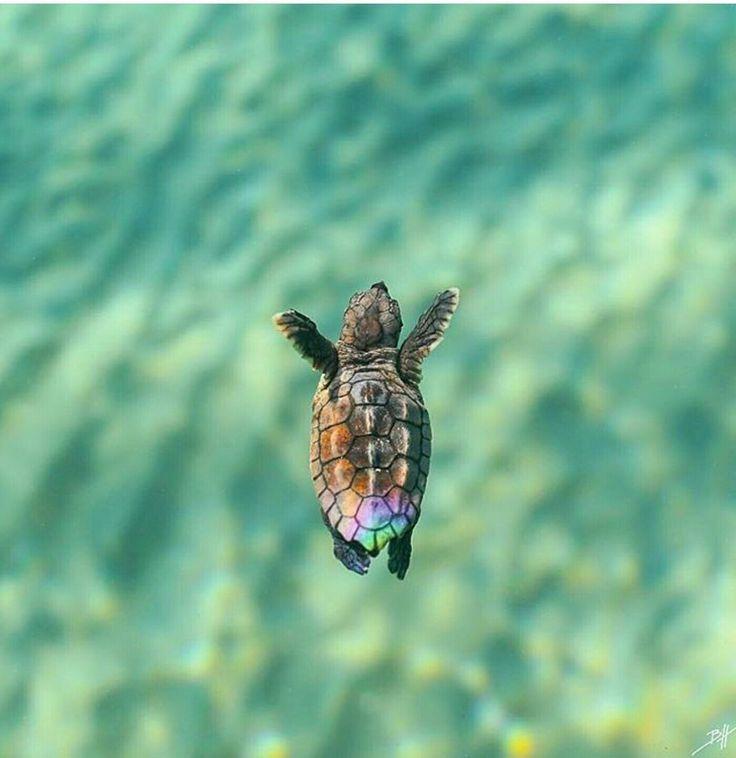 Swim, tiny turtle!
