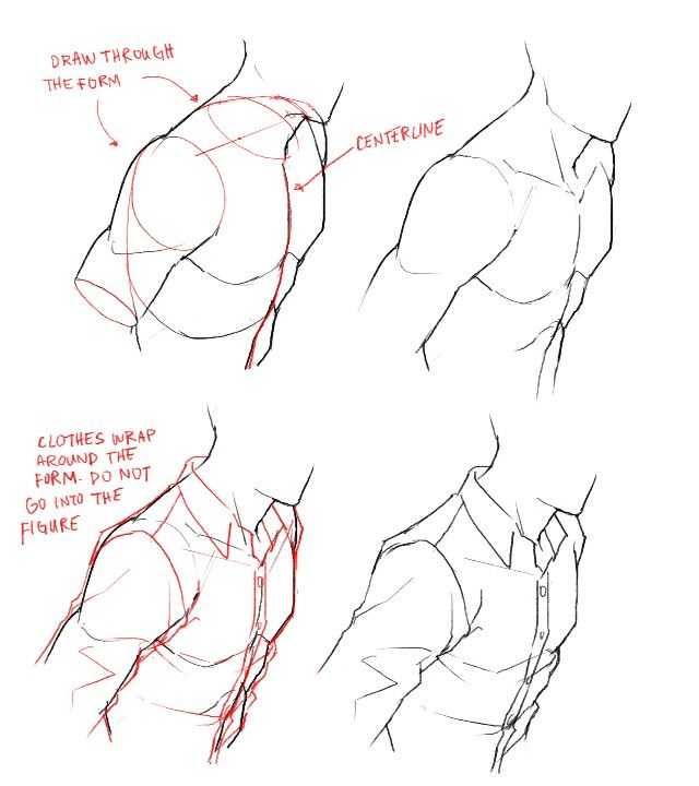Anatomy tips || feredir.tumblr.com | ฝึก | Pinterest | Anatomy ...