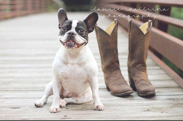 Dog Laurie Dallriva Photography Nashville French Bulldog